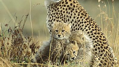 Leopard cub rescued from open gym at Yeoor Hills