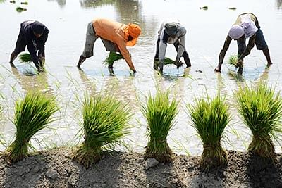 Madhya Pradesh: Minister Kamal Patel seeks extension of crop insurance premium deadline