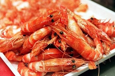 Prawns can protect us from parasitic disease: Study