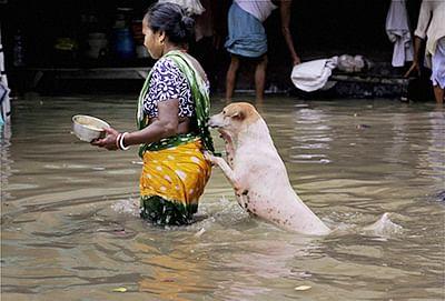 Rain fury wreaks havoc in Bengal
