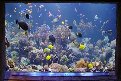Aquariums can lower BP, improve mood