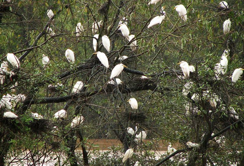 Madhya Pradesh: 'Hawk eye' vulture census on February 7, state confident of gaining status