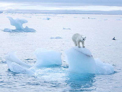 Melting Arctic sea ice affects land eco-systems