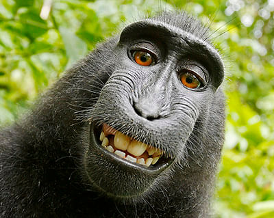 Monkey owns right to his selfie: PETA