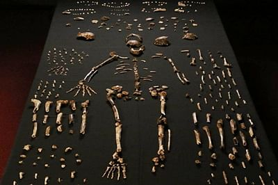 Ngandong was the last 'home' of Homo erectus