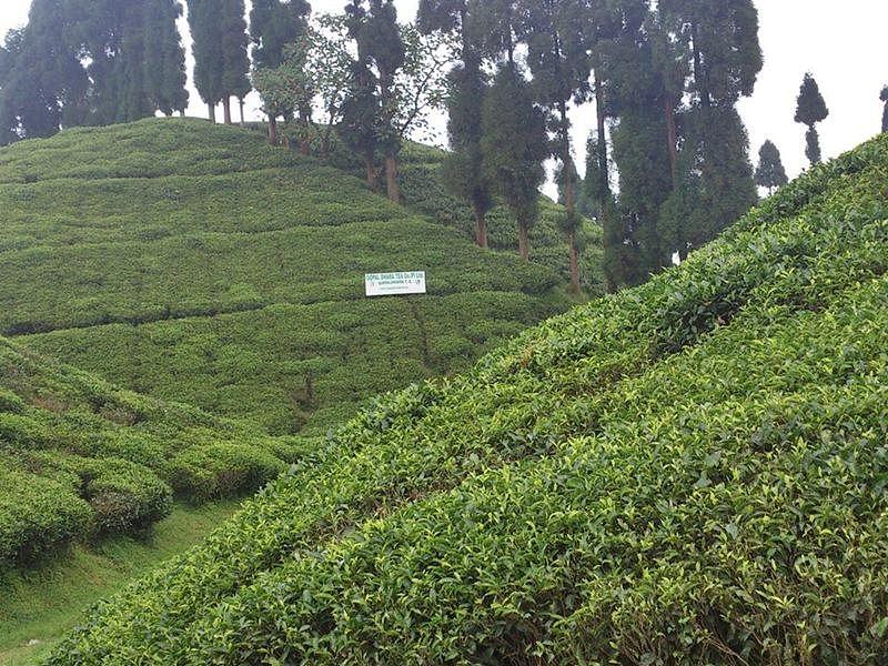 Santosh Kanoria family acquires Jungpana, Goomtee tea estates in Darjeeling