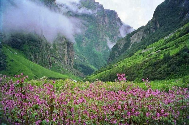 Valley of Flowers<br />Picture credits: www.walkthroughindia.com