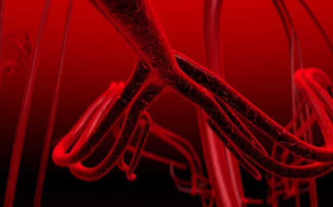 Key to growing human blood vessels found