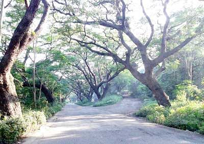 Members of CM-appointed panel too opposed Metro depot at Aarey Colony