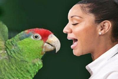 Human, birds have similar sound systems