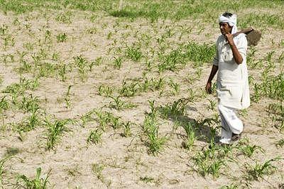 Maha Drought: Task Force seeks ban of cash crops