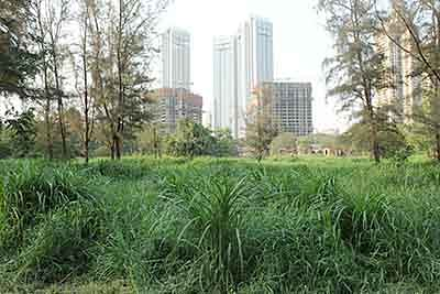 City college survey reveals 59% believes Aarey is a forest