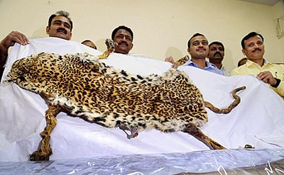 2 from Pune held in Thane with leopard skin worth Rs. 10 lakh