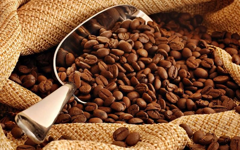 The report further found that statewise, Karnataka dominates the coffee industry, accounting for most exports, followed by Andhra Pradesh that exports more than 50 per cent of instant coffee, which commands a 31 per cent share in the country's export basket.