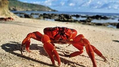 Shelling out: Crab fetches 5m yen at auction