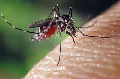Seasonal sting in the tail; Protracted rains led to rise in dengue, dengue-like illnesses Health experts