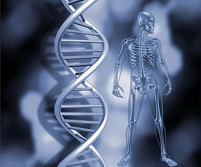 Revealed: How new genes emerge during evolution