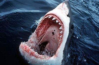 Shark bites surfer's board in half off Australian east coast