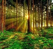 3D 'cyberforests' created to predict effects of climate change