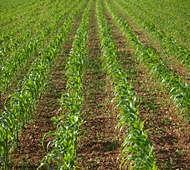 Govt may provide market-linked insurance for plantation crops