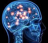 Not just pancreas, brain too regulates glucose metabolism