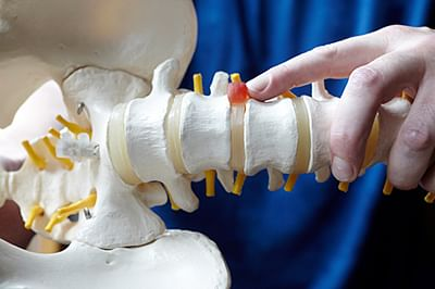 Spongy material helps  repair the spinal column