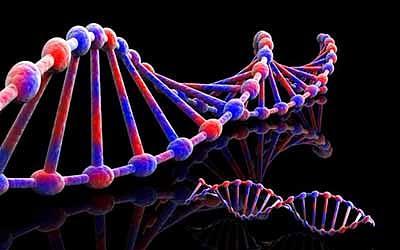 C13JEE DNA