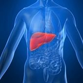 Why lean people get fatty liver disease