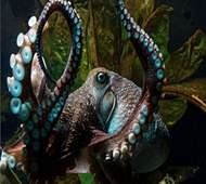 Inky the octopus makes great escape from N Zealand aquarium
