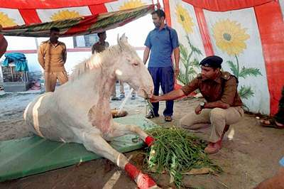 Dehradun: A file photo of Shaktiman, the Uttarakhand police horse which died in Dehradun on Wednesday. The horse was injured during a BJP protest in Uttarakhand on March 14. PTI Photo  (PTI4_20_2016_000171B)
