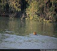 Solar power, boats, ham radio to aid voting in the Sundarbans