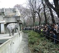 World's oldest elephant dies at 69 in Japan zoo