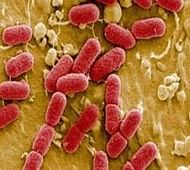 Novel rapid test for bacterial infections found promising