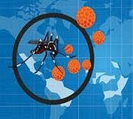 World's first Zika virus clone developed