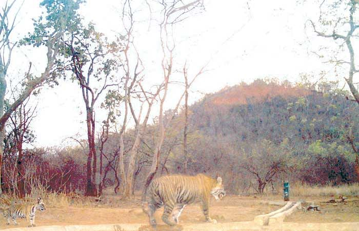 Madhya Pradesh: Elephant kills range officer in Panna Tiger Reserve