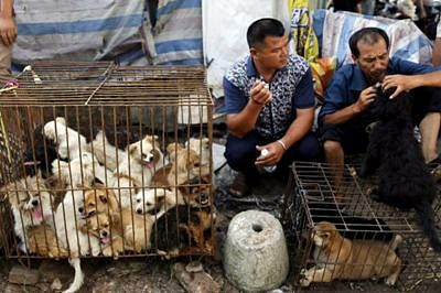 China's annual Yulin dog meat festival begins