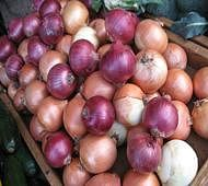 Onion prices zoom to 4 year high on supply woes