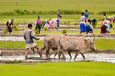 Bhopal: Farmers demand crop procurement at village level