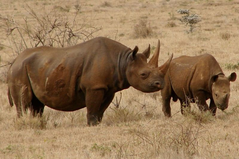 Animal Poaching: Software used to study stars will be soon used to save animals from being poached