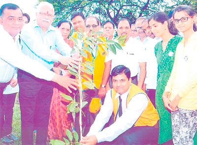Students to adopt saplings
