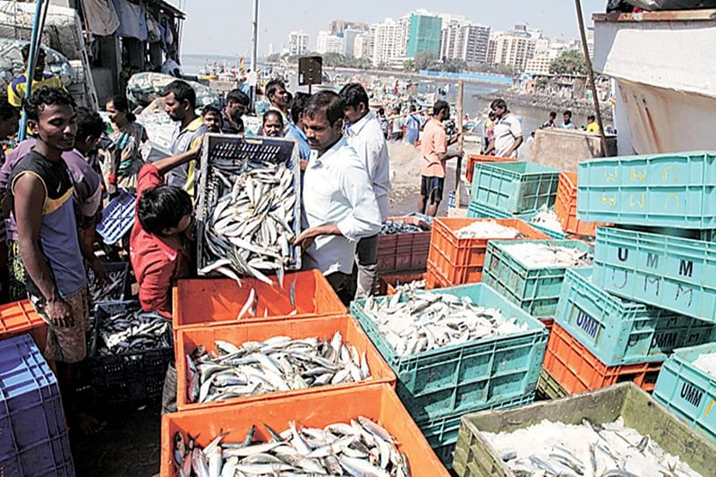Formalin scare: Goa lifts ban on fish imports; keeps strict vigil on border
