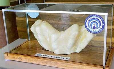World's most valuable pearl was kept under a man's bed for 10 yrs