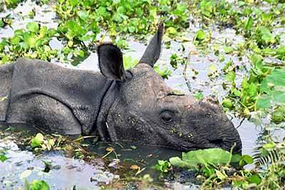 250 animals perish in Kaziranga floods