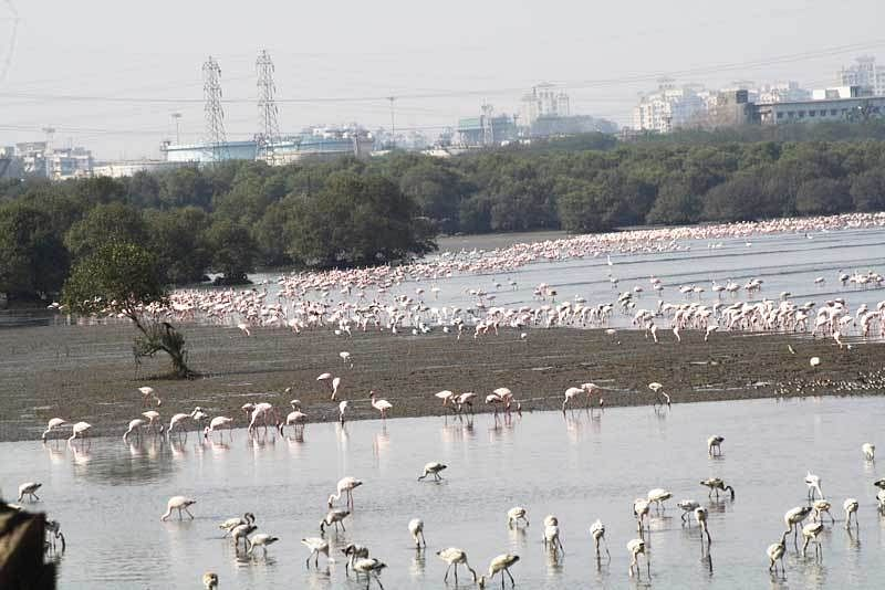 Upcoming Navi Mumbai airport to clip Flamingo wings
