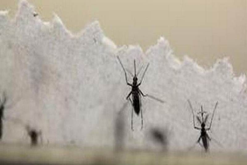 Zika virus outbreak worse than reported, projects study