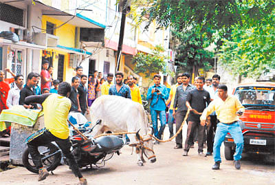 Cattle owners on mobikes encircle IMC team