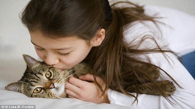 Cuddling with cat can lead to brain swelling and heart infection: Study