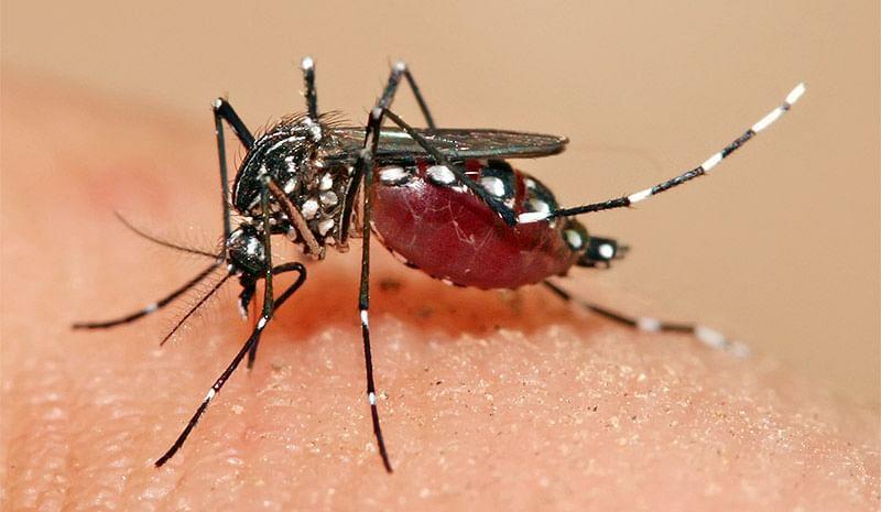 Mumbai: Dengue death toll rises to 12 and three due to leptospirosis