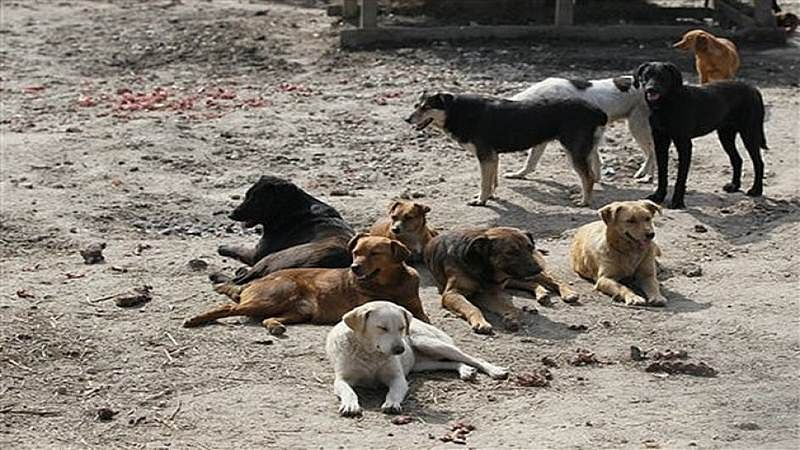 At Deonar, meat traders complain of stray dogs