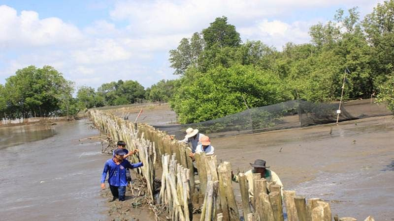 Kapil effect: Fences soon to protect mangroves